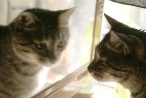 cat-mirror2